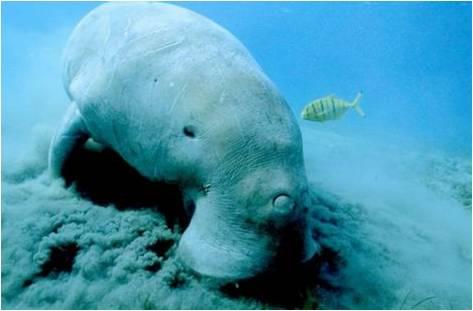海洋生物大全